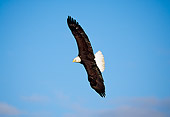 BRD 02 RF0091 01