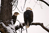 BRD 02 RK0033 11
