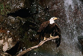 BRD 02 RK0076 04