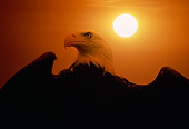 BRD 02 RK0096 12