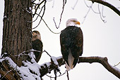 BRD 02 RK0134 09