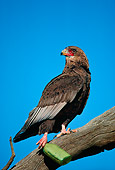 BRD 02 SM0049 01