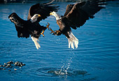 BRD 02 TL0001 01