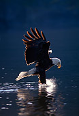 BRD 02 TL0010 01