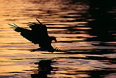BRD 02 TL0020 01