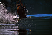 BRD 02 TL0025 01