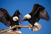 BRD 02 TL0030 01