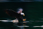 BRD 02 TL0034 01