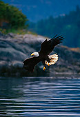 BRD 02 TL0037 01