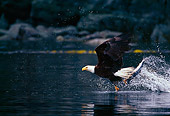 BRD 02 TL0040 01