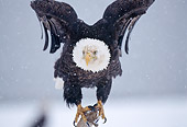 BRD 02 TL0043 01