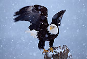 BRD 02 TL0044 01