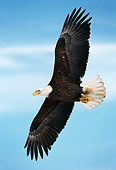 BRD 02 TL0046 01