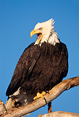 BRD 02 TL0053 01