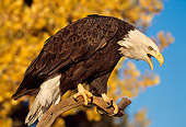 BRD 02 TL0054 01