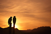 BRD 02 TL0056 01