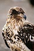 BRD 02 TL0058 01