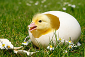 BRD 03 AC0008 01