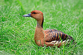BRD 03 AC0023 01