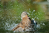 BRD 03 AC0026 01