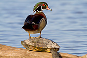 BRD 03 DA0004 01