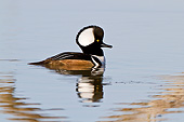 BRD 03 DA0013 01