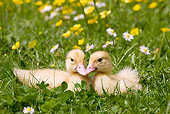 BRD 03 JE0011 01