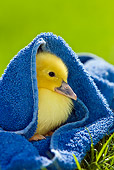BRD 03 KH0028 01