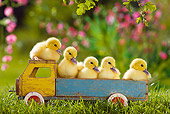 BRD 03 KH0032 01