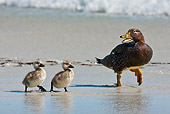 BRD 03 KH0038 01