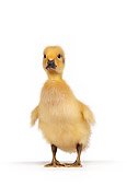 BRD 03 RK0003 05