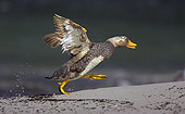 BRD 03 WF0001 01