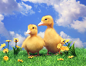 BRD 03 XA0001 01