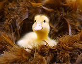 BRD 03 XA0003 01