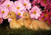 BRD 03 GR0011 01