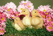 BRD 03 GR0023 01
