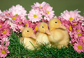 BRD 03 GR0025 01