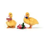 BRD 03 KH0005 01