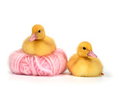 BRD 03 KH0007 01