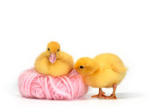 BRD 03 KH0008 01