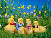 BRD 03 KH0010 01