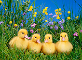 BRD 03 KH0011 01