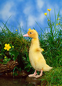 BRD 03 KH0019 01