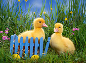 BRD 03 KH0020 01