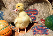 BRD 03 LS0001 01