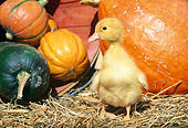 BRD 03 LS0002 01