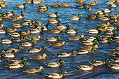 BRD 03 NE0001 01