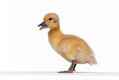 BRD 03 RK0002 07