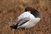 BRD 03 RK0018 01