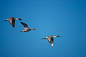 BRD 03 RK0030 03